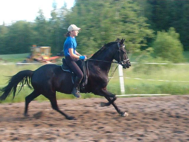Death_on_horse parduodami zirgai A_7b03d3