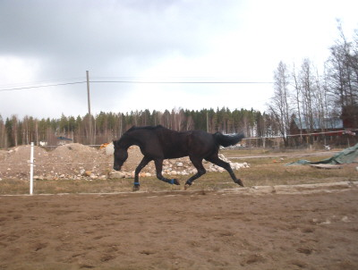 Death_on_horse parduodami zirgai A_959364