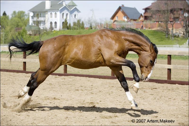 Death_on_horse parduodami zirgai A_deabbd