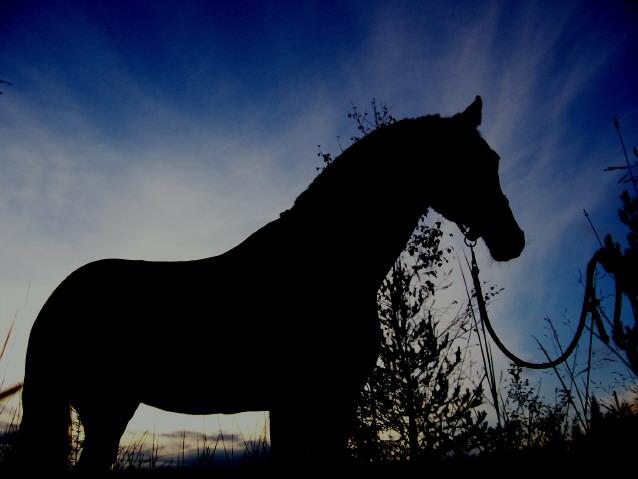 Death_on_horse parduodami zirgai A_ee89da