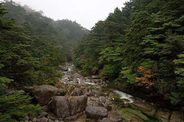 Zanimljivosti iz  geografije - Page 2 Yakushima-4