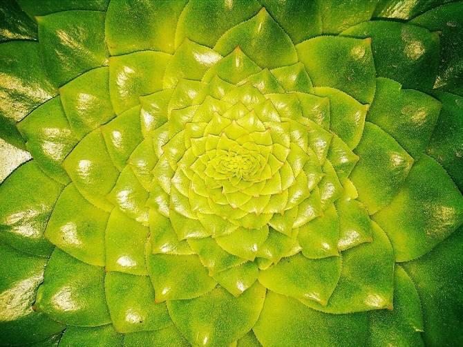 25 photographies époustouflantes de géométrie sacrée dans la nature Finonacci-Garden_670