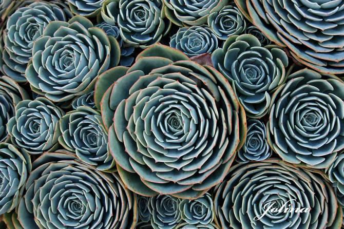 25 photographies époustouflantes de géométrie sacrée dans la nature Succulents_670