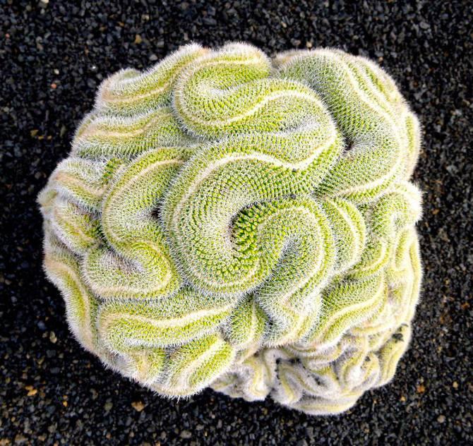 25 photographies époustouflantes de géométrie sacrée dans la nature Thinking-Cactus_670