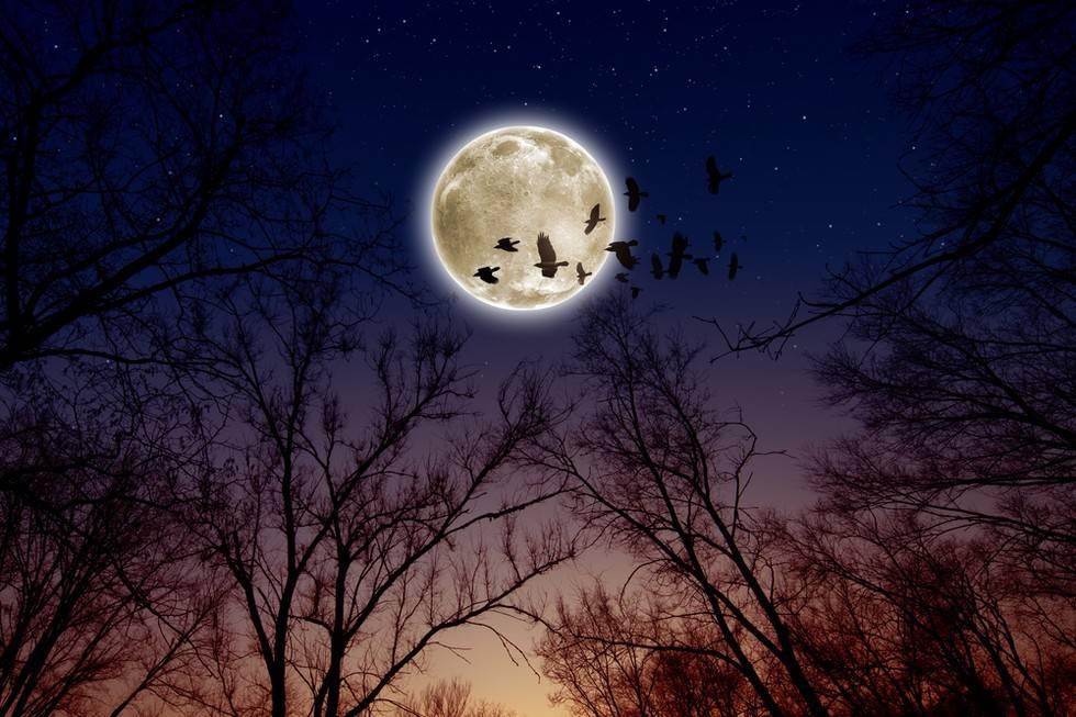 Pleine lune en Capricorne : voici ce que vous devez savoir sur les nouveaux défis qui vont survenir 980x-1