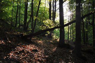 Igra svjetlosti  - Page 5 Cesta-na-mensi-vrch