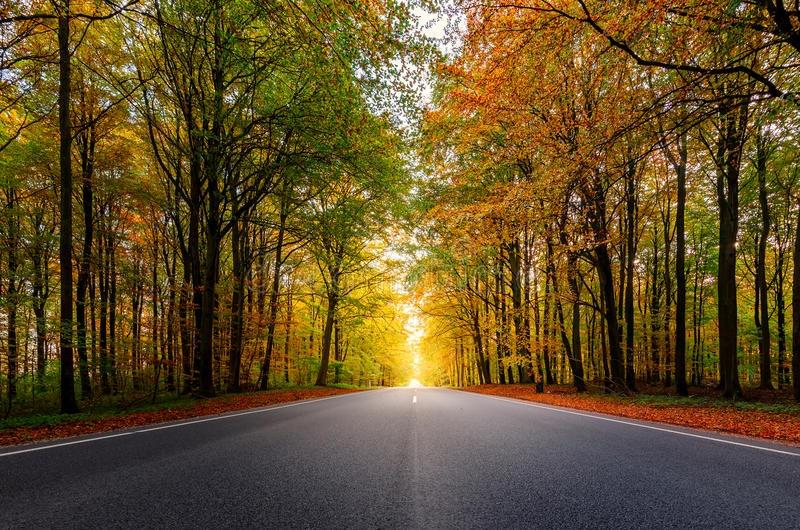 Topic unique : Posez vos questions à Renov'Car Passion -> ND Car Care 1517840477-800-x-530px-foret
