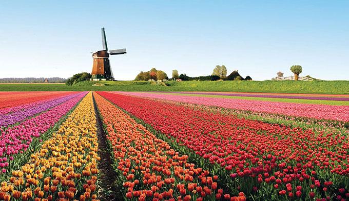 [Jeu] Association d'images - Page 3 Champ-de-tulipes-hollande