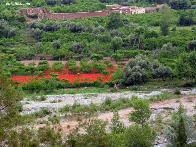 بلاد المغرب بالصور High_atlas_ourika_valley