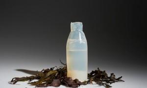 Biodegradable Algae Water Bottles Provide Eco-Friendly Alternative to Plastic Biodegradable-algae-water-bottle-ari-jonsson-2-300x180