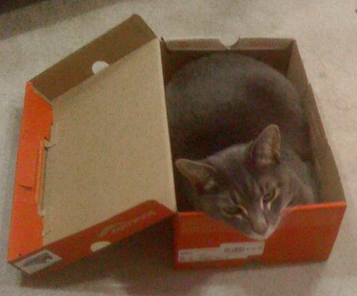 Gattilicious  =^.^= Ollie_box_cat