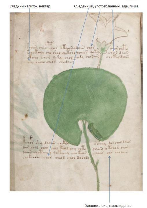 "Research Anichkin Nikolai Matveyevich ""Voynich manuscript indecipherable."" RV%201"