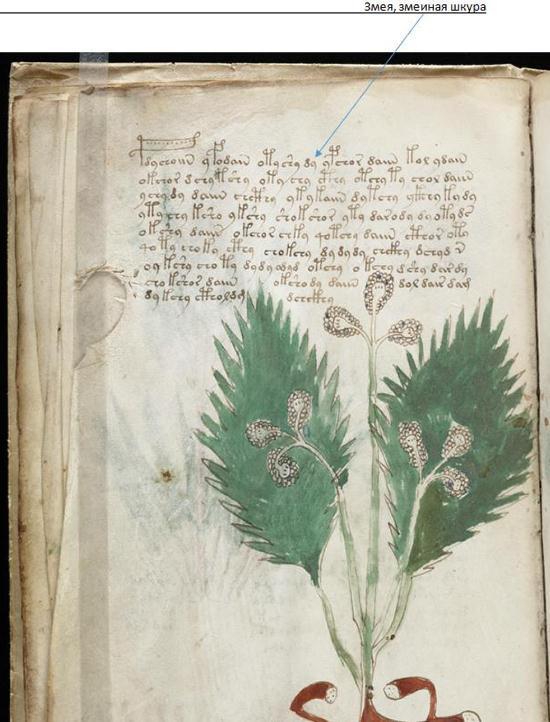 "Research Anichkin Nikolai Matveyevich ""Voynich manuscript indecipherable."" RV%204"