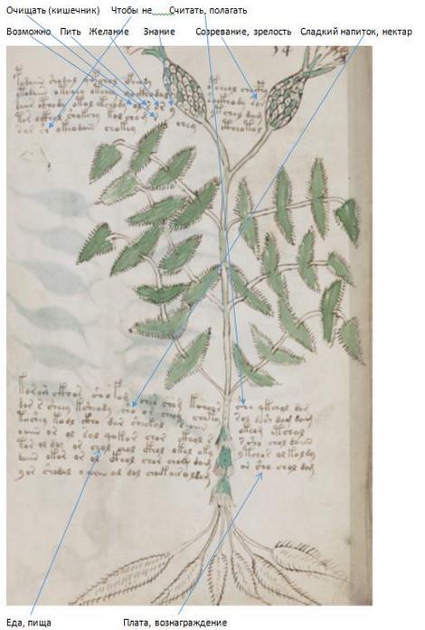 "Research Anichkin Nikolai Matveyevich ""Voynich manuscript indecipherable."" RV%205"