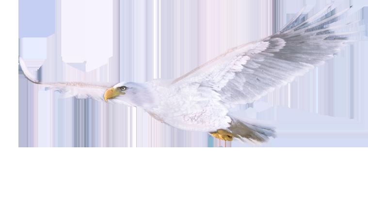 Dialogues  Eagle