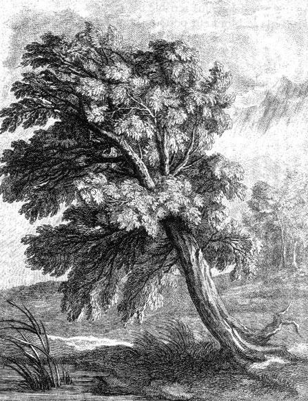 Le chêne et le roseau - Jean de La Fontaine 23