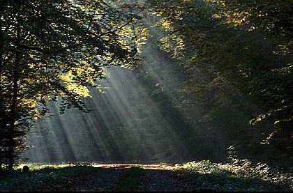 Quand la terre et le ciel... Rayon-soleil-tranchee-gignz