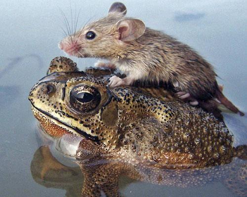 Друзья все понимают - Страница 4 16_animal_friendships_6