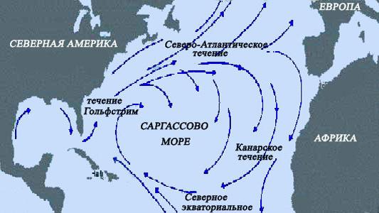 Самые необычные, удевительные явления природы - Страница 2 Sargasso-sea-2
