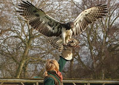 Comparação do tamanho de águias  com relação ao homem. IMG_0082%20400%20crop