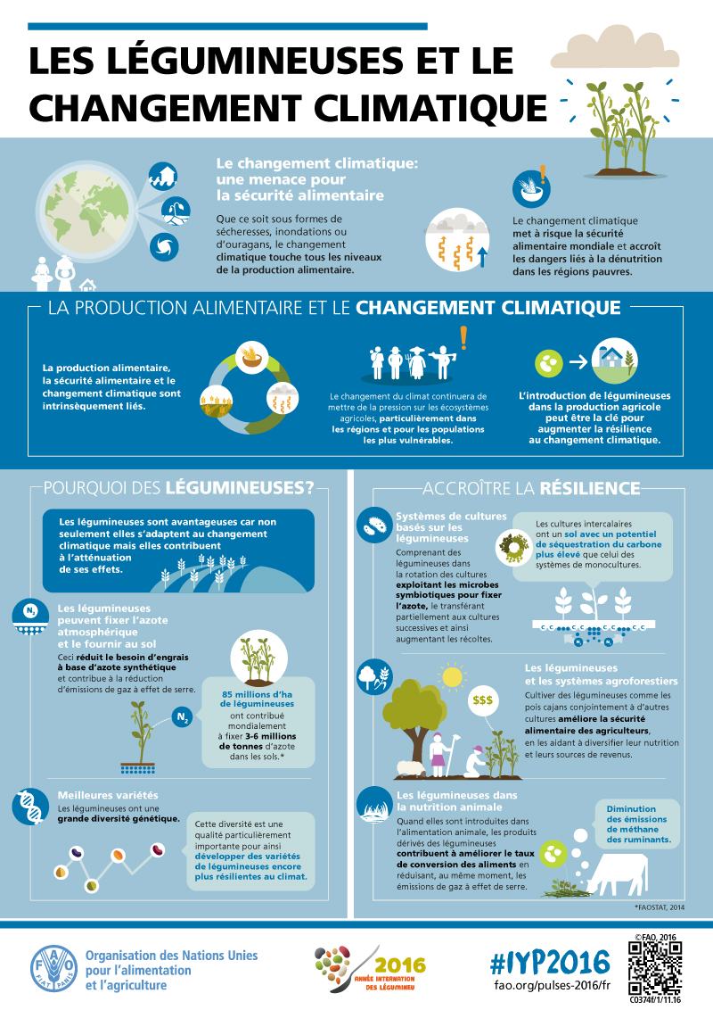 [Infographies] FAO (Organisation des Nations Unies pour l'alimentation et l'agriculture) FAO-Infographic-IYP2016-4-Pulses-and-Climate-Change-fr