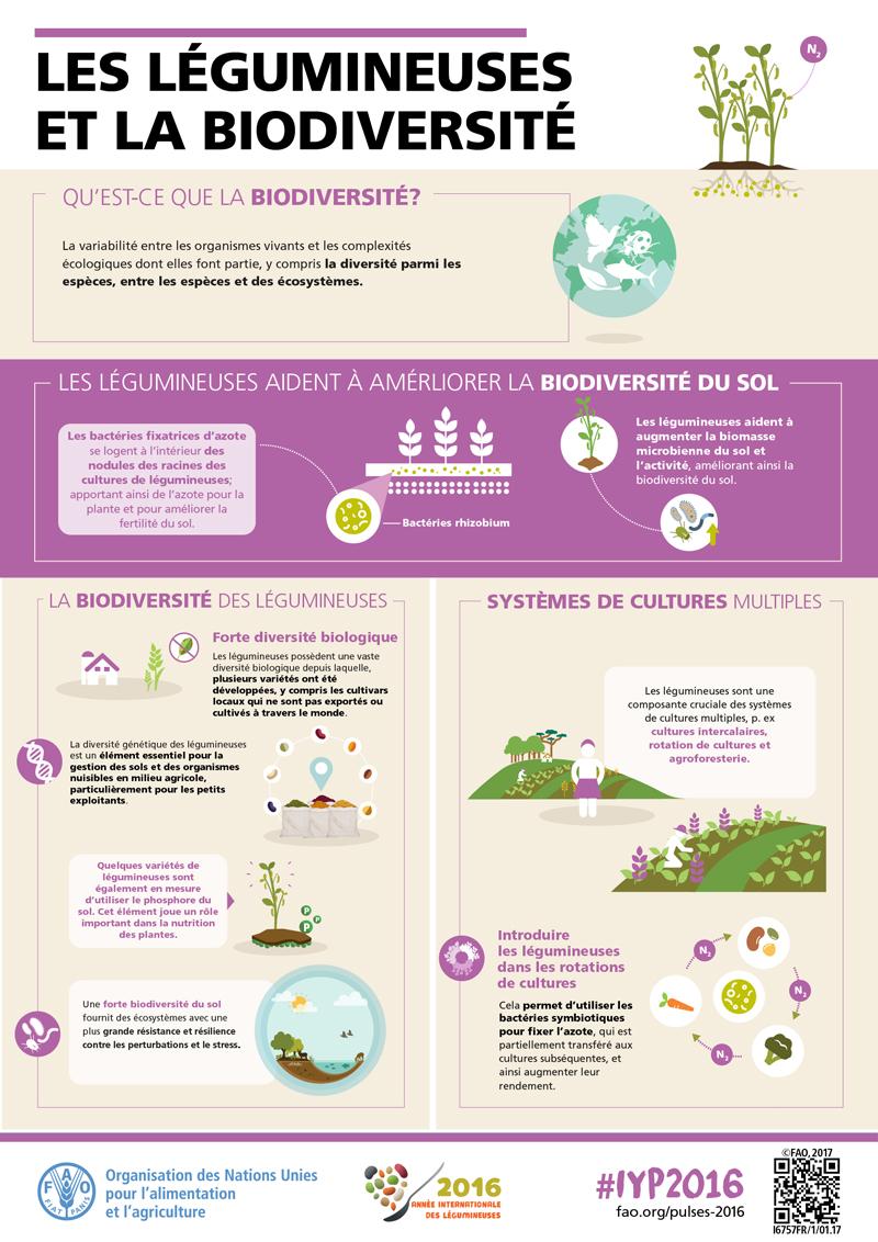 [Infographies] FAO (Organisation des Nations Unies pour l'alimentation et l'agriculture) FAO-Infographic-IYP2016-5-Biodiversity-fr