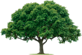 فوائد الشجرة المتعددة ومما تتكون الأشجار Trees20