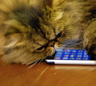 Ici, postez les choses que vous ne savez pas comment qualifier - Page 4 Iphone-cat-721439