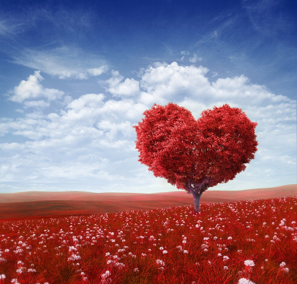 Si l'amour…   Amour