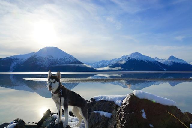 Aurora's Alaskan Life AuroraNov1