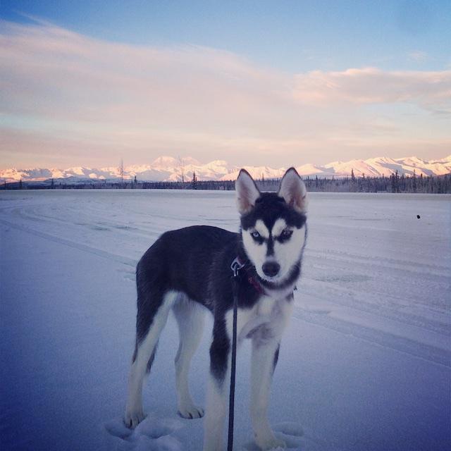 Aurora's Alaskan Life AuroraOct3