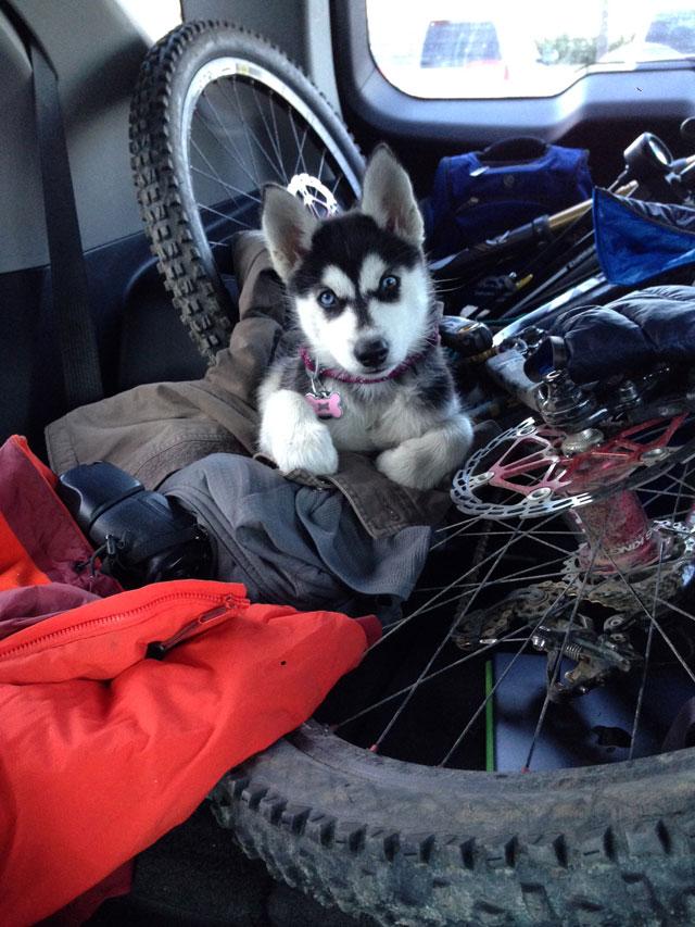 Aurora's Alaskan Life AuroraSeward4