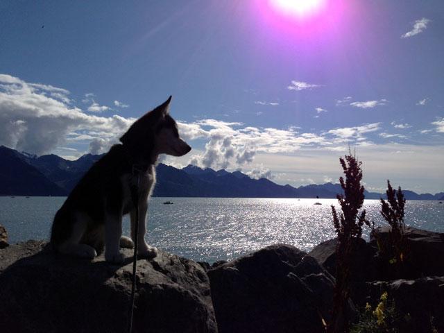 Aurora's Alaskan Life AuroraSeward7