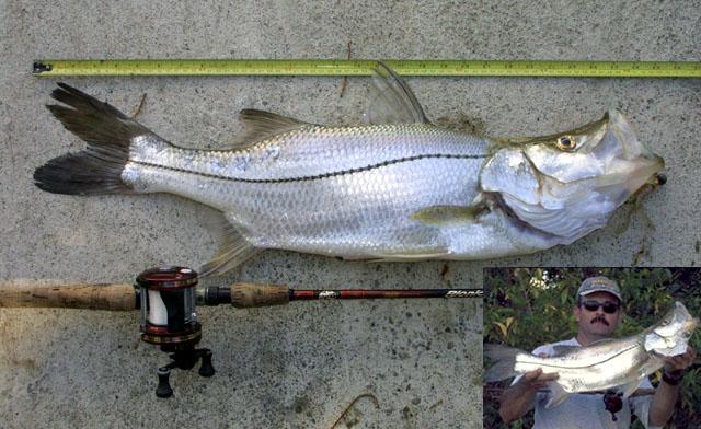 La Pesca del Róbalo (Centropomus sp.) por José Manuel López Pinto / Actualizado a 03 de Noviembre del 2013 Cemed_u1