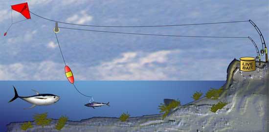 43 aparejos /armadas con anzuelo para presentar carnadas en el mar Hawaii-fishing-rig