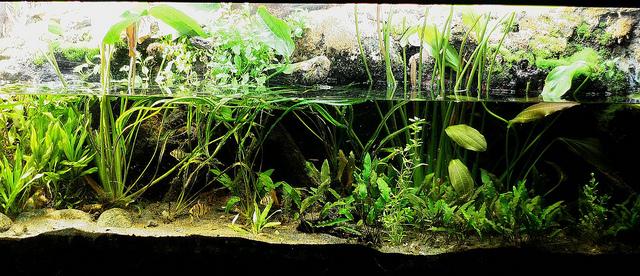 Projet aquarium débutant 8435096788_2d83c72ff8_z