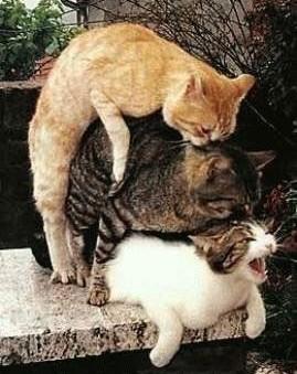 Stop à l'invasion des chats ! - Page 2 Chats-2