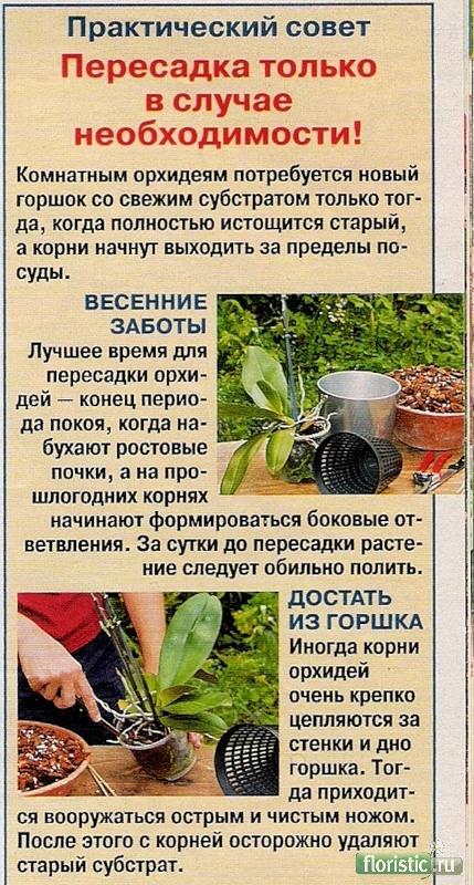 орхидея или фаленопсис - Страница 2 22722d1263910061-orhidei-0_1ff06_681b1b4f_xl
