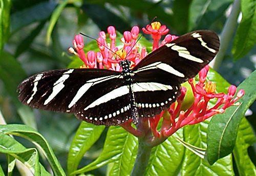 صور فراشات روعه Butterfly_02_7