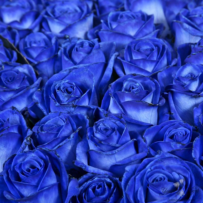 Поздравлялки! 3 - Страница 21 Gde-kupit-sinie-rozy