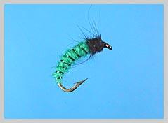 koje vrste riba Rhyaco_larva