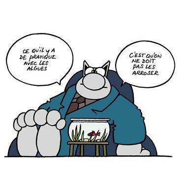 BD : LE CHAT  Chat-1