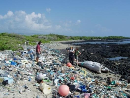 Une ile en plastique au large du Pacifique (article, vidéos et photos) 2011-04-09-00-23-42-733150-494565