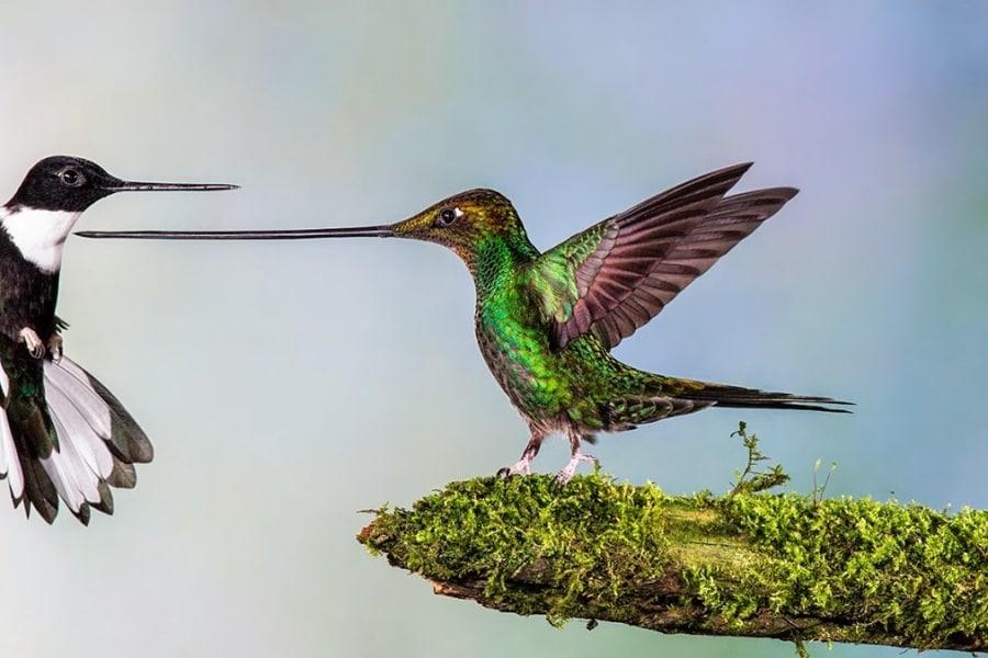 L'arte della fotografia - Pagina 2 Wildlife-photographer-year-2014.900x600