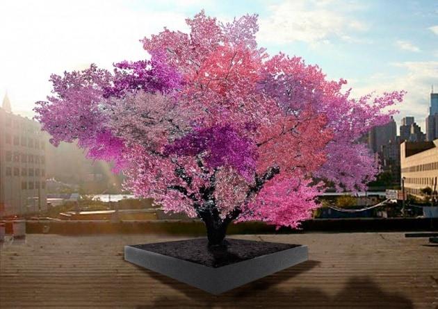 Misteri: Stranezze e curiosità - Pagina 7 Tree-for-web-rect-989x700.630x360