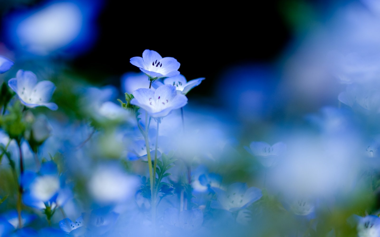 """""""... En azul..."""""" - Página 2 Paisaje-flores-azules"