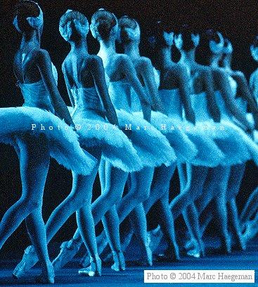 Corps de Ballet du Lac des Cygnes Swanlake8