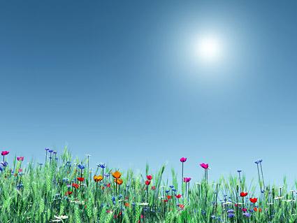 Xin vết thương lòng hãy nở hoa ( Thơ DL-Tina) 1216698178