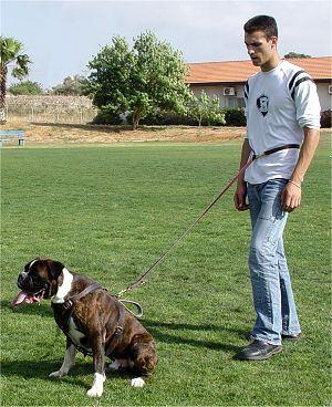 Luis The Hedgehog sheet - Page 2 Police-training-leather-dog-leash-waist-leash