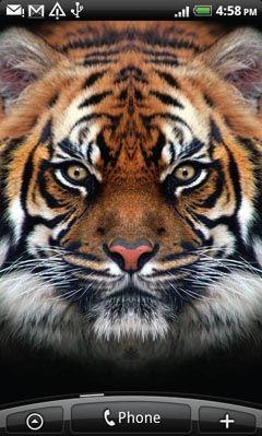 Обои для Android 1327558990_tiger1